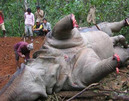 a rhino. murdered