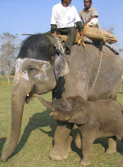 elephant with mother