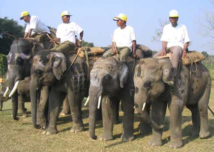 elephants of all size on dispaly in Chitwan, Nepal