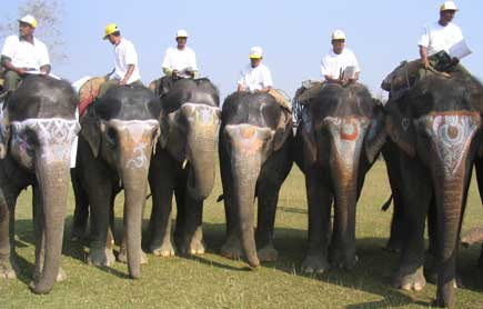elephants ready for race