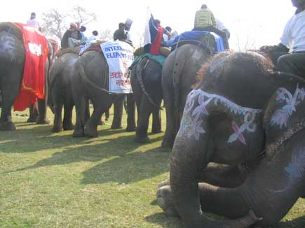 elephants ready for race.jpg