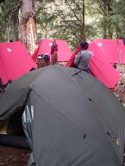 The Jungle Camp
