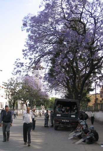 policemen under flower trees