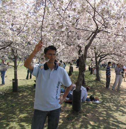 Cherry Blossom Festival. Wagle under Cherry tree